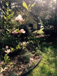 Spring magnolia garden