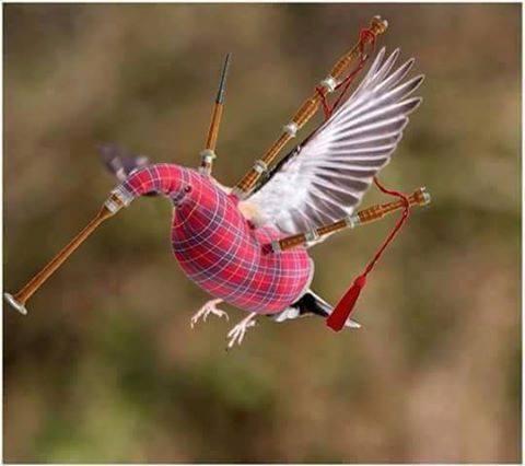 Rare Scottish Hummingbird